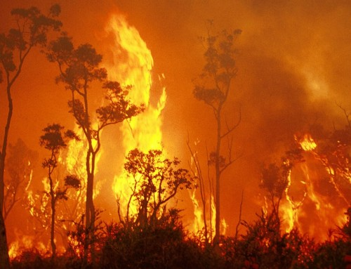 Tax Information Regarding Donations to the Bushfire Relief