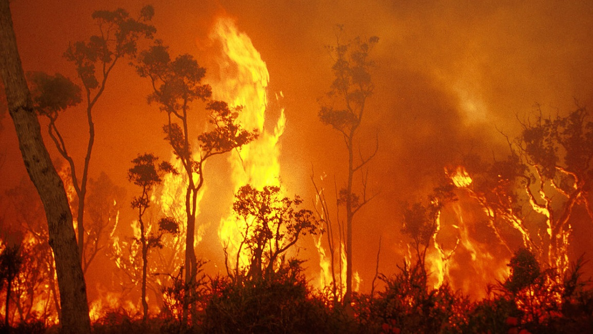 Australian Bushfire Appeals - information on claiming the donations with your tax return